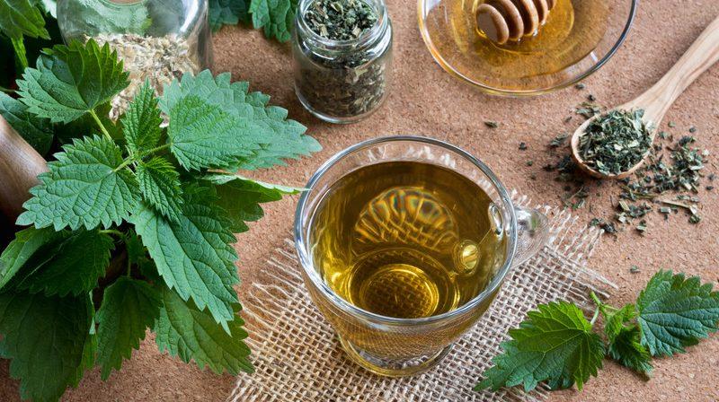 Nettle, Herbal Teas, Sage Hill Botanicals, sagehillbotanicals.com